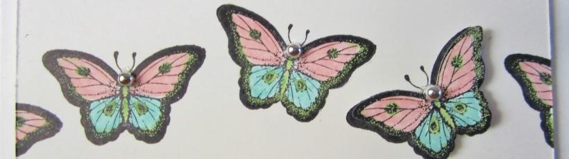 Papillion Potpourri HM'13 (3)